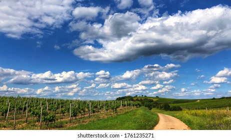 Sky and clouds over Rhenish Hesse near Bodenheim and Nierstein. Riesling Vineyards in foreground.