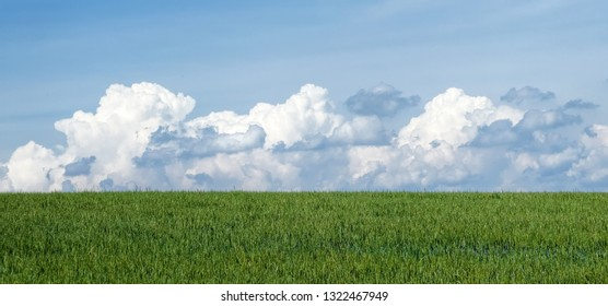 sky, clouds and wheat