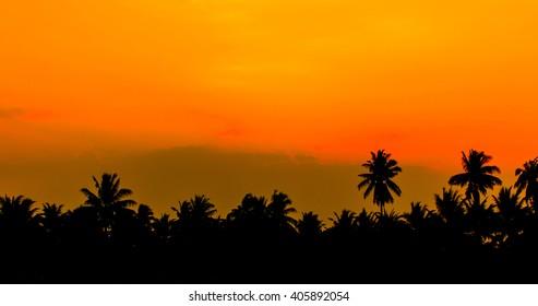 sky dawn with coconut tree