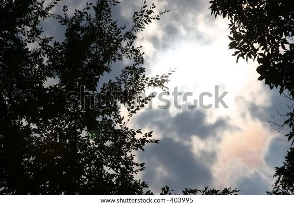 Sky at dusk shot through trees.