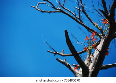 Sky and flowers on the tree