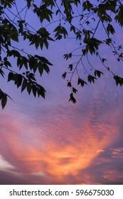 sky frames 1