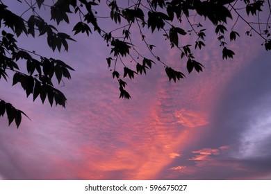 sky frames 2