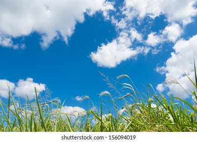 sky and grass in autumn