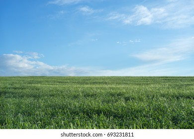 Sky and grass background, fresh green fields under the blue sky