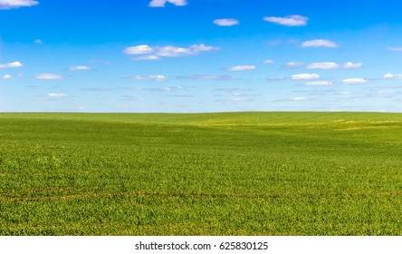 sky and grass (ground), background