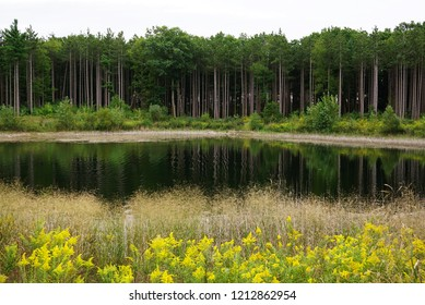 Sky, green forest, mirrow water, beige herbs and yellow flowers are located on the photo in horizontal layers. Calm lake with mirror water near mysterious forest and grass. Fresh yellow color of herbs