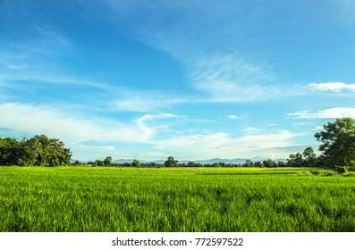 sky Green grass landscape