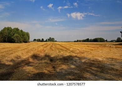 sky landscape environment Plant Field Land tranquil scene