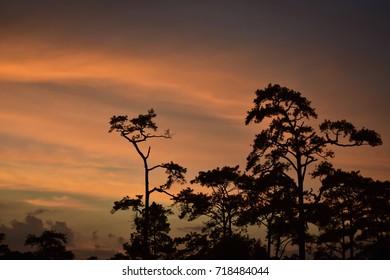 sky orange