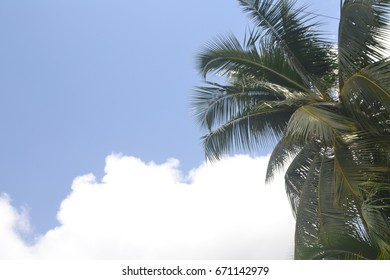 Sky with palm tree