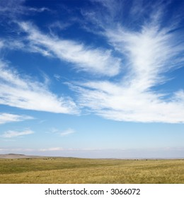 Sky scene of golden field and wispy cirrus clouds.