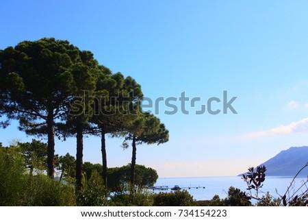 b8d6e85bfffd Sky Sea Beyond Pines Corsica Porto Vecchio Stock Photo (Edit Now ...