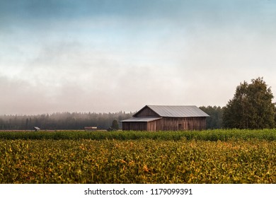 The sky is slowly clearing up from the morning mist on the fields of the rural Finland. The late summer mornings can be pretty cold and very misty.