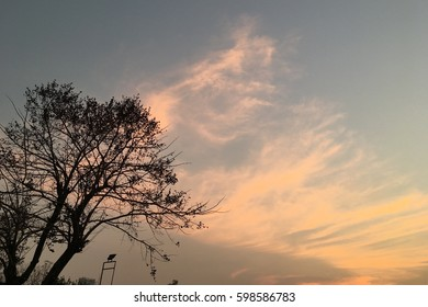 Sky at sunset with silhouette tree