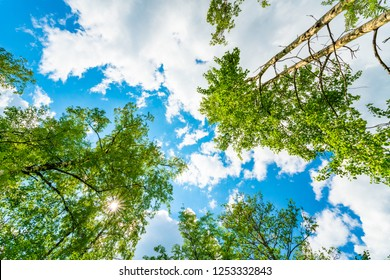 The sky with the tops of trees. View up from ground level. Beautiful nature. Mixed forest. Blue sky with sun and clouds. Russia, Europe.