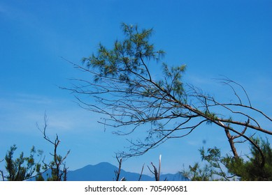 Sky and tree branches