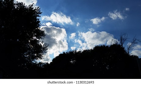 Sky With Tree Silhouettes
