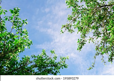 the sky with a tree top
