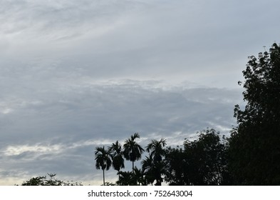 sky with trees in the morning