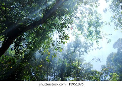 Sky and trees in the rain forrest.