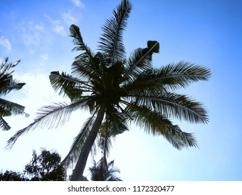 Sky View Under The Coconut Tree In The Fields At Banjar Kuwum, Ringdikit, North Bali, Indonesia