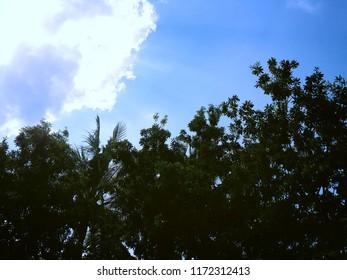 The Sky View Under Manilkara Zapota Trees In The Fields Ringdikit Village, North Bali, Indonesia