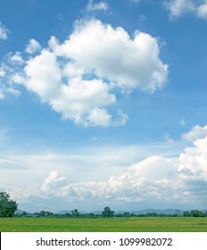 sky white clouds and rice field green background
