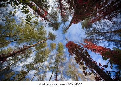 The sky in the woods in autumn