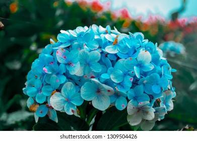 A skyblue flower