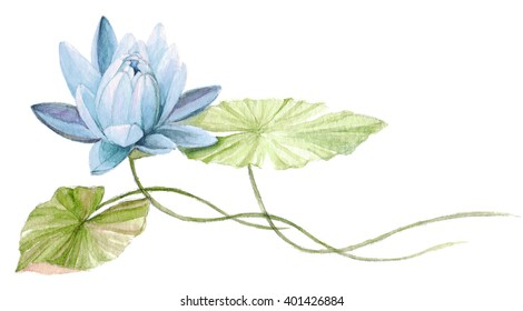Sky-blue water Lily or lotus flower on the water. Hand drawn, watercolor botanical illustration.