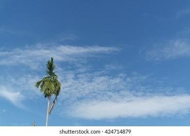 Sky,cloud and Areca nut tree