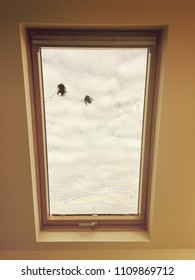Skylight window with mesh blind and two spots of bird dropping. Issue with skylight window. Dirty skylight window