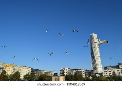 Skyline Pigeon Scene Unfolding Before My Stock Photo (Edit Now ...