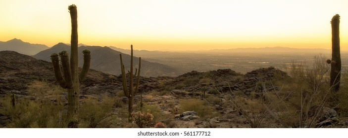 Skyline view of Phoenix, Arizona desert with saguaro cactus and city in background at sunset. Horizontal banner with copy space.