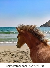 Skyrian Pony Horse running free on the beach