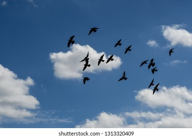 Skyscape of pigeons silhouetted in a blue cloudy sky.