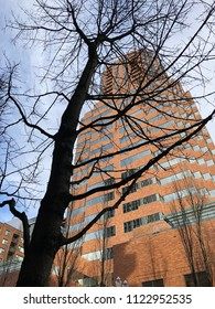 Skyscraper with tree in foreground.