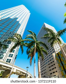 Skyscrapers and palm trees in downtown Miami on a sunny day. Southern Florida, USA