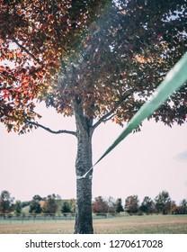 Slack line on tree