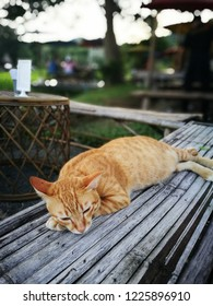 slacker ginger cat sleeps happily on a bamboo chair.