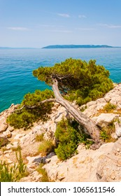 Slanted mountains pine tree on rocky sea shore with island on the background