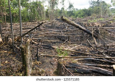 Slash and burn cultivation, rainforest cut and burned to plant crops in the Ecuadorian Amazon
