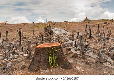Slash and burn cultivation, rainforest cut and burned to plant crops, Thailand