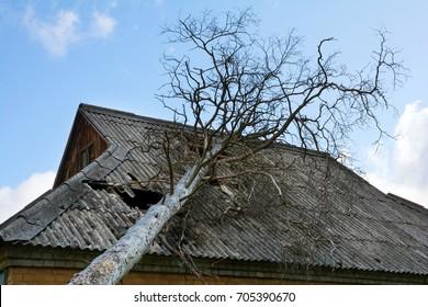 Slate asbestos roof damaged by a fallen down tree.