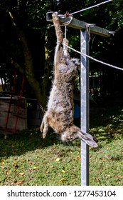 The slaughter of the animal hare Animal slaughter The death of the hare rabbit