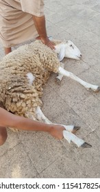 Slaughter of sheep (Eid al-Adha)