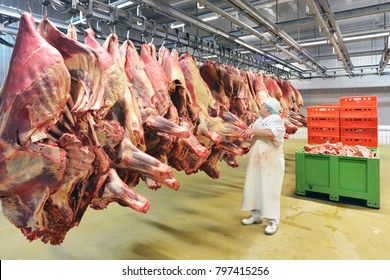 Slaughterhouse: Flewischer inspects freshly slaughtered cattle halves in the cold store of a butcher's shop for the further processing of sausages