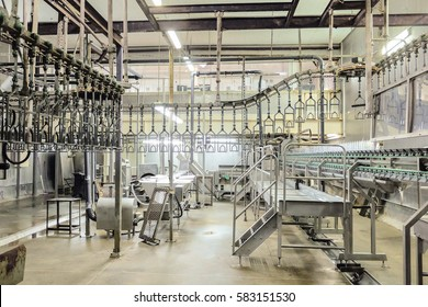 Slaughterhouse poultry factory. Poultry processing plant line. Production of chicken meat.