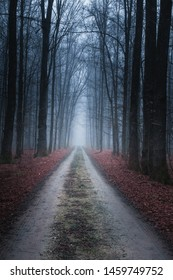 Slavonia region, Croatia, 09.02.2019. - Road in forest at early winter foggy morning